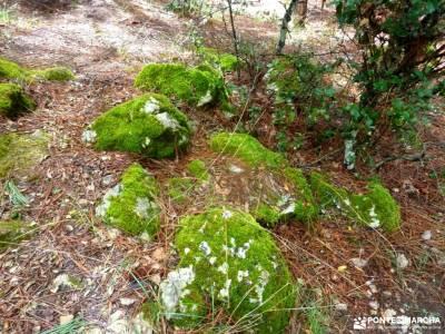 Parque Natural Cazorla-Sistema Prebéticomochilas para campamento monasterio de yuste bosque de oma;